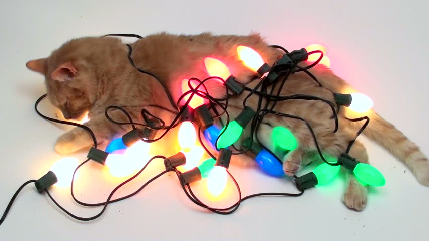 Christmas+lights+are+hard+to+detangle+and+pose+a+threat+to+our+pets.+