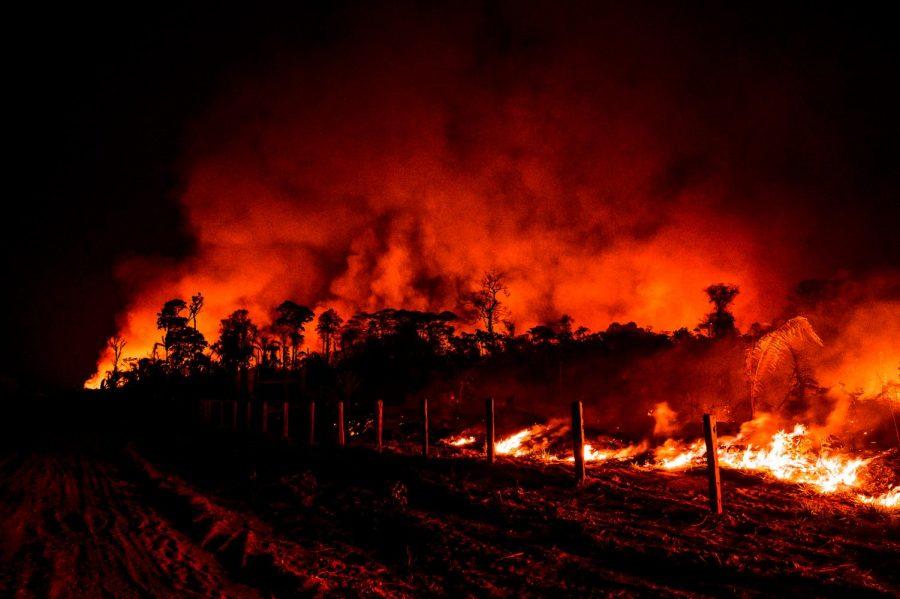 Brazil to Blame for Burning Biodiversity