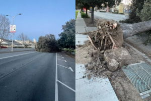 The strong winds caused a tree to fall on Fremont Boulevard near Washington High School. (Picture Credit: Fremont USD)