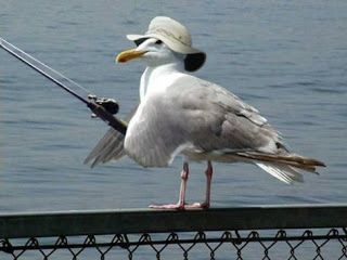 A rare picture of a seagull general commanding his troops through Irvington's courtyard.